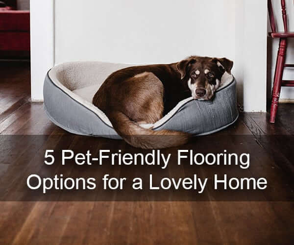 5 Pet-Friendly Flooring Options for a Lovely Home