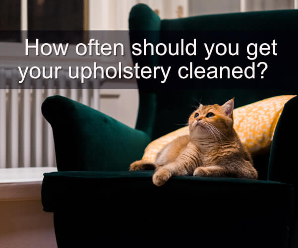 How Often Should You Get Your Upholstery Cleaned?